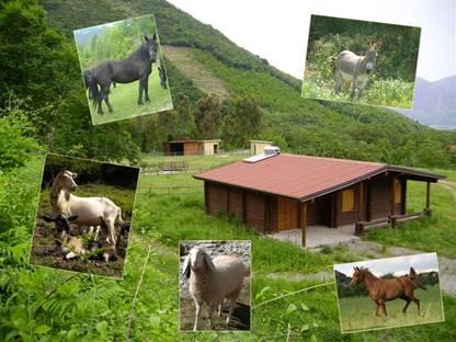 Mercato san severino inaugurazione bio fattoria a for Pulizie domestiche salerno